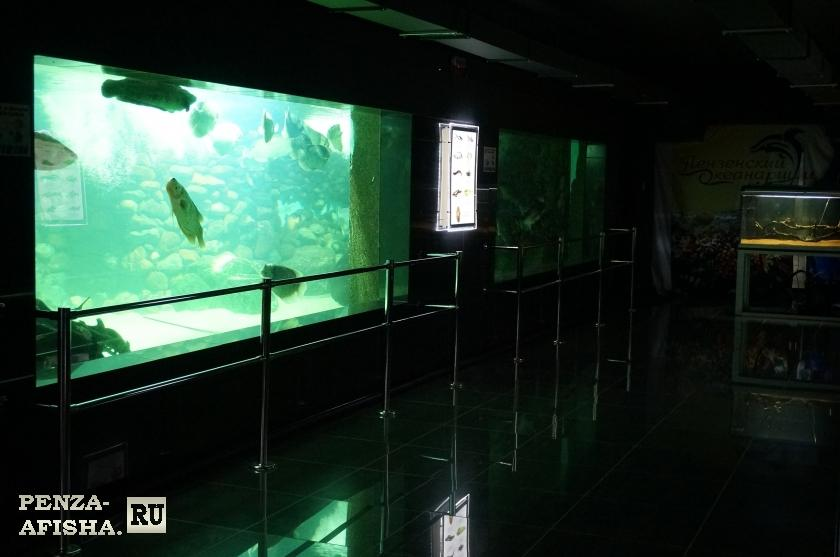 Фото - Пензенский океанариум